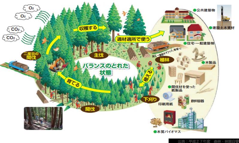 健康な森のサイクルの画像