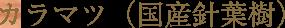 カラマツ(国産針葉樹)